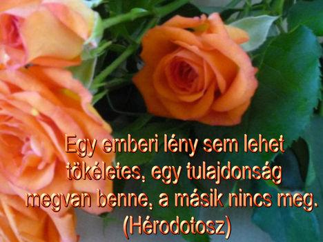 Virágok és bölcsességek 32