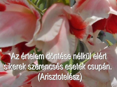 Virágok és bölcsességek 34