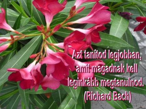 Virágok és bölcsességek 37