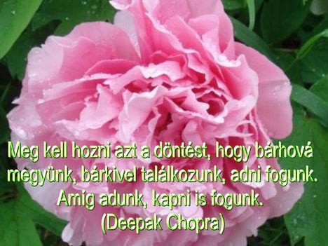 Virágok és bölcsességek 39