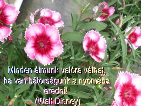 Virágok és bölcsességek 5