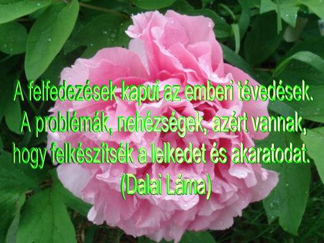 Virágok és bölcsességek 7