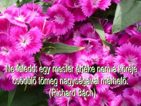Virágok és bölcsességek 8