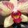 Orchideam_1652391_3695_t