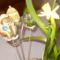 tojás,terítő,nyúl 9