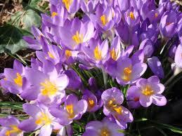 Egy bokor tavasz