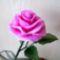 Rózsa2