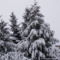 Téli havas fotók