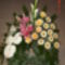 új virágok 231