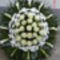 új virágok 239