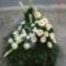 új virágok 243