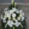új virágok 245
