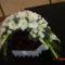 új virágok 258