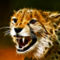 Cats_wallpapers_365