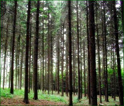 Fenyvespuszta, Tuzson-Arborétum