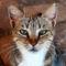 Fractal_Cat_1_by_aceman67