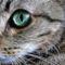 Fractal_Cat_2_by_aceman67