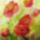 Akvarell_viragsorozat-001_1661324_4764_t