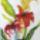 Akvarell_viragsorozat-003_1661326_5211_t