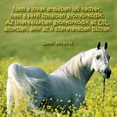 lovas versek idézetek Lovakról klub: lovas (kép)