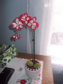 piros orchidea