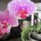 virágaim 001