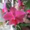virágaim 005