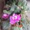 virágaim 007