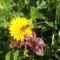 A virág  és a méhecske (KARCSI KÉPE)