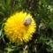 A virág bogárral (KARCSI képe)