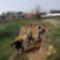 TIMÁR Gyurgyalag partfalak felújítása