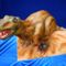 T-rex Dinó torta