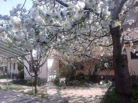 a cseresznye 4