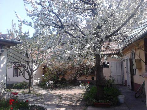 a cseresznye 5