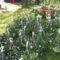 árvácskák  - virágvásár