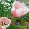 halvány rózsaszínek