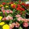 Szépségek a virágvásáron