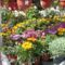 Virágvásáron voltam