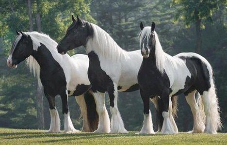 gyönyörű lovak 1
