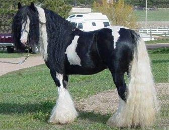 gyönyörű lovak 2