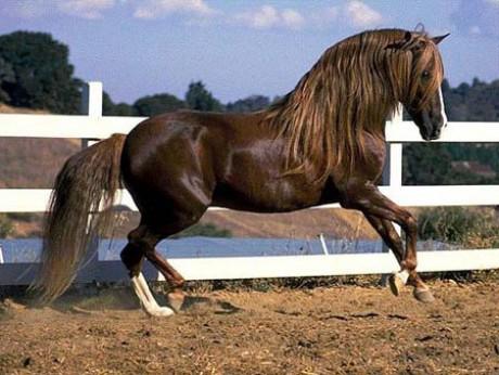 gyönyörű lovak 4