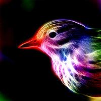 Fractal_Bird_by_minimoo64