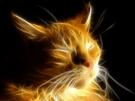 Fractal_Cat_IV_by_Nueschi