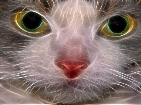 Fractal_Cat_Stare_Wallpaper__yvt2
