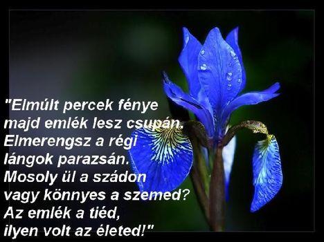 idezet