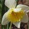 Tavasz hirnökei 1