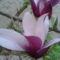 Tavasz Völcsejen 3