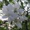 Tavasz Völcsejen 5
