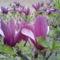 Tavasz Völcsejen 7