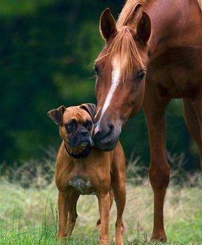 Ló és kutyus ...
